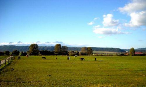 Zdjecie SłOWACJA / Spisz / Hrabusice / Pastwisko z Tatrami w tle