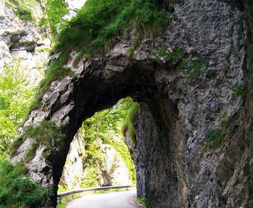 Zdjęcia: Nieopodal miejscowośc Trzic, Północna Słowenia, Przyroda zawsze zwycięża, SłOWENIA