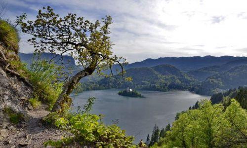 Zdjecie SłOWENIA / Bled / Bled / Wysepka na Jeziorze Bled
