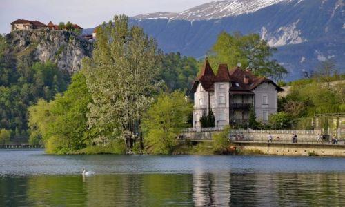Zdjęcie SłOWENIA / Carniola / Bled / Skała nad jeziorem Bled