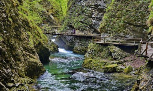 Zdjecie SłOWENIA / Carniola / Bled / Rzeka Vintgar