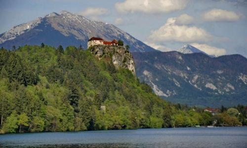 Zdjęcie SłOWENIA / Bled / b / Twierdza
