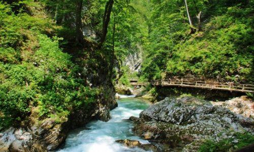 Zdjecie SłOWENIA / Triglavski Park Narodowy w Alpach Julijskich / Wąwóz Vintgar / Wąwóz Vintgar