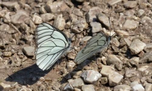 Zdjecie SłOWENIA / Alpy Julijskie / Planica /  Jurasem nie będę, motylem nie jestem ;)... part 2