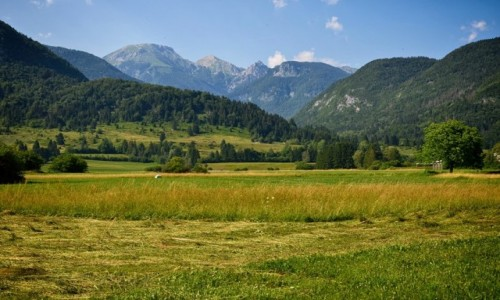 Zdjecie SłOWENIA / Alpy Julijskie / Studor v Bohinju / pachnie sianem...