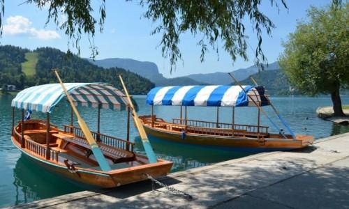 Zdjecie SłOWENIA / Alpy Julijskie / Jezioro Bled / prawie Wenecja...
