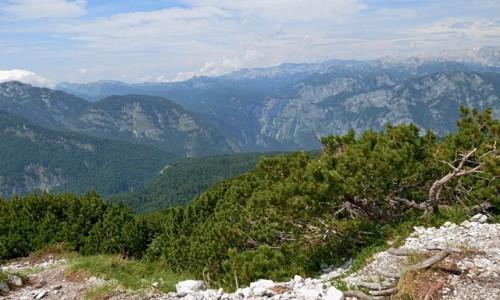 Zdjecie SłOWENIA / Alpy Julijskie / Zadni Vogel / z kosówki...