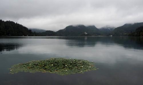 Zdjęcie SłOWENIA / Alpy Julijskie / Bled / spacer w deszczu...