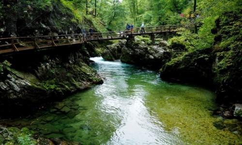 Zdjęcie SłOWENIA / Alpy Julijskie / Triglavski Park Narodowy / w wąwozie Vintgar...