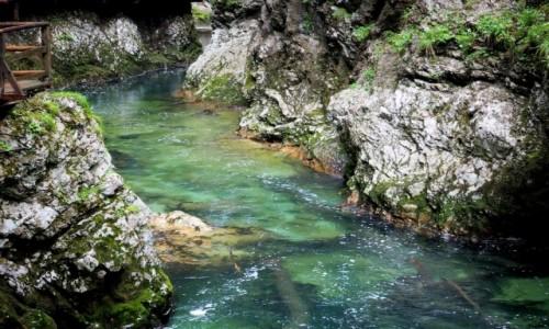 Zdjecie SłOWENIA / Alpy Julijskie / okolice Bled - wąwóz Vintgar / szmaragdowa głębia...