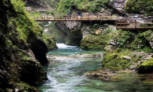 Zdjęcie SłOWENIA / Alpy Julijskie / Wąwóz Vintgar / wiszące mostki...