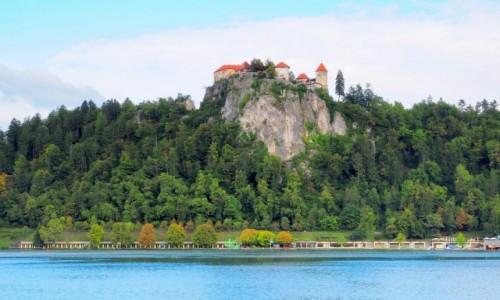 Zdjecie SłOWENIA / Alpy Julijskie / Bled -zamek / na stromym klifie...