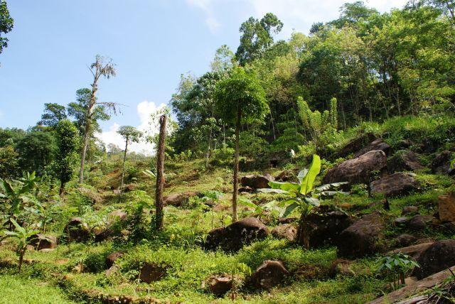 Zdjęcia:  ,  , Pobocze drogi - roślinność, SRI LANKA