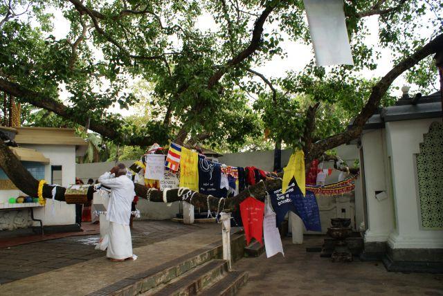 Zdjęcia:  ,  , Przed świątynią, SRI LANKA