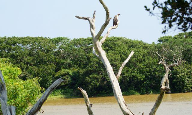 Zdjęcia: Yala,  , Orzeł, SRI LANKA