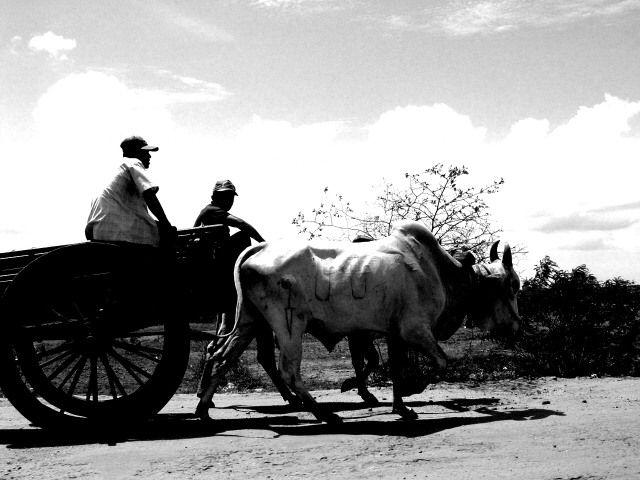 Zdjęcia: Niedaleko Trincomalee, Wschodnie wybrzeże, wóz, SRI LANKA