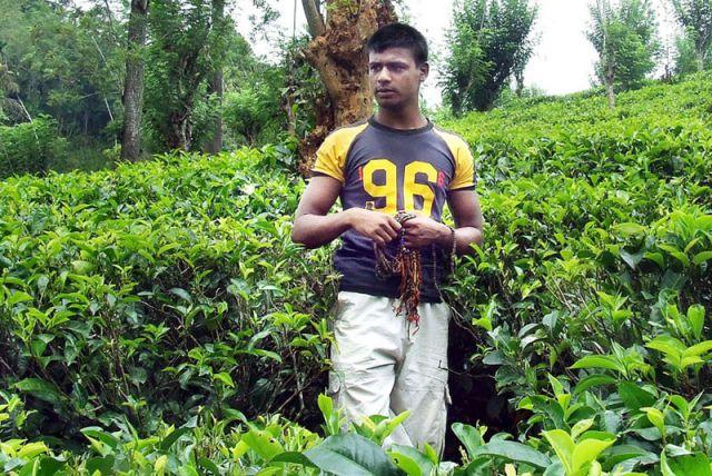 Zdjęcia: młody w herbacie, SRI LANKA