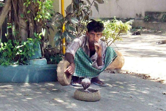 Zdjęcia: -.., zaklinacz węży, SRI LANKA