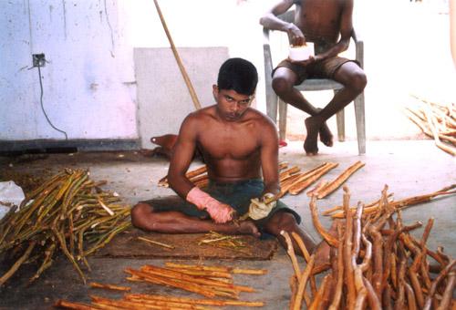 Zdjęcia: Sri Lanka środkowa, FABRYKA CYNAMONU, SRI LANKA
