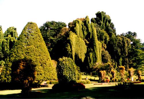 Zdjęcia: SL, Ogród botaniczny, SRI LANKA