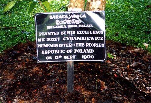 Zdjęcia: Ogród botaniczny, Mr Cyrankiewicz, SRI LANKA