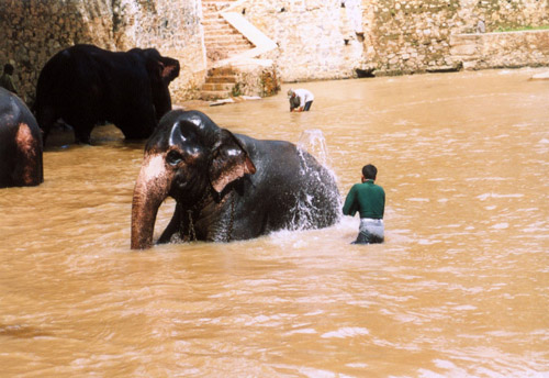 Zdjęcia: sl, Sierociniec słoni, SRI LANKA