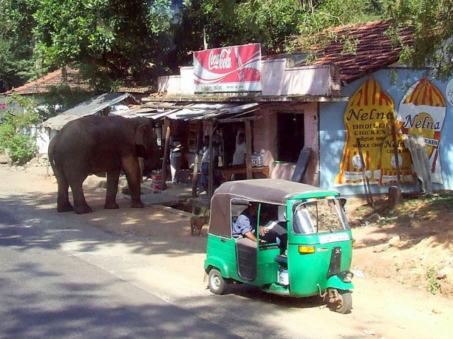 Zdjęcia: północ Ceilonu, słoń w poszukiwaniu pożywienia, SRI LANKA