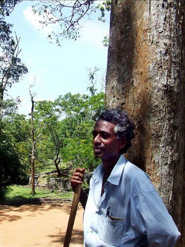 Zdjęcia: Colombo, pomocnik, SRI LANKA