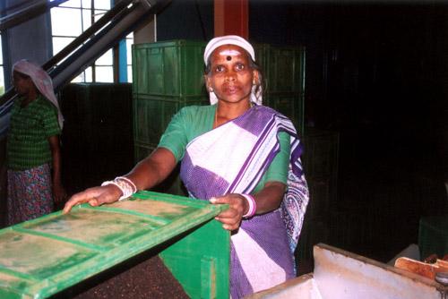 Zdjęcia: sl, Fabryka HERBATY (pracownica miesiaca), SRI LANKA