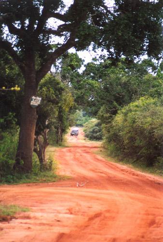 Zdjęcia: sl, Yala National Park, SRI LANKA