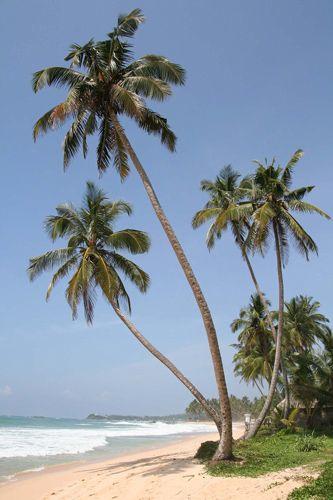 Zdjęcia: Południe Wyspy, Unawatuna Beach, SRI LANKA
