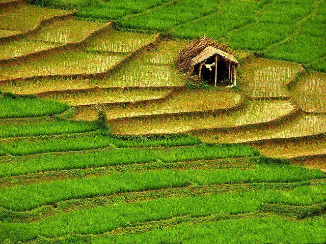 Zdjęcia: POŁUDNIOWY WSCHÓD WYSPY, zielono mi ...., SRI LANKA