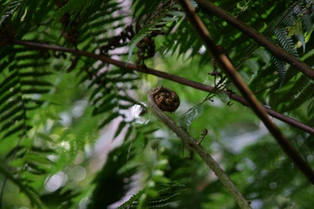 Zdjęcia: Rezerwat lasow deszczowych, W krainie paproci, SRI LANKA