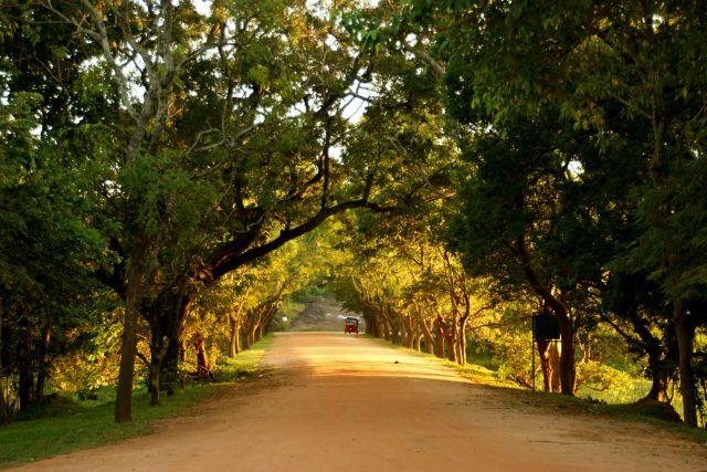 Zdjęcia: Siliguri, Siliguri, Droga, SRI LANKA