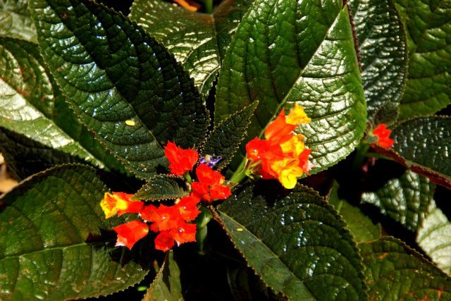 Zdjęcia: Kendy, Kendy, Kwitną, SRI LANKA
