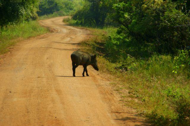 Zdjęcia: Yella, Yella, Samotny  na drodze , SRI LANKA