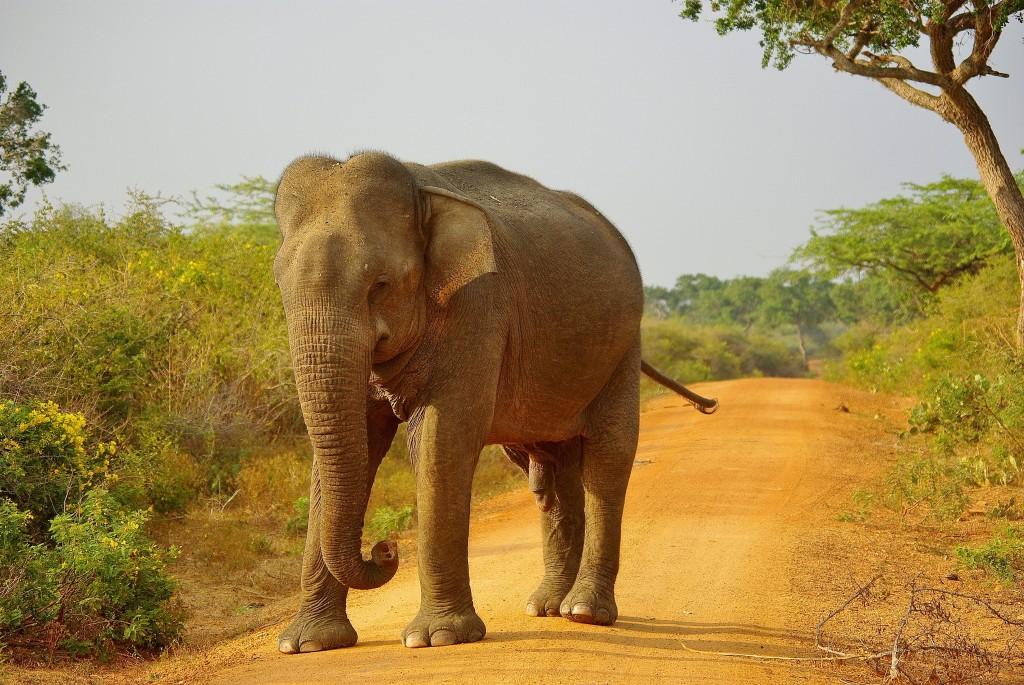 Zdjęcia: Bundala National Park, Południe wyspy, Sri Lanka, SRI LANKA