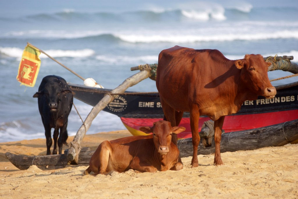 Zdjęcia: Kalutara, Plażing, SRI LANKA