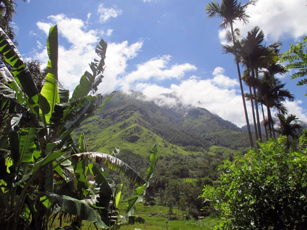 Zdjęcia: Kulapahana, Prowincja południowa, Tonąc w zieleni, SRI LANKA