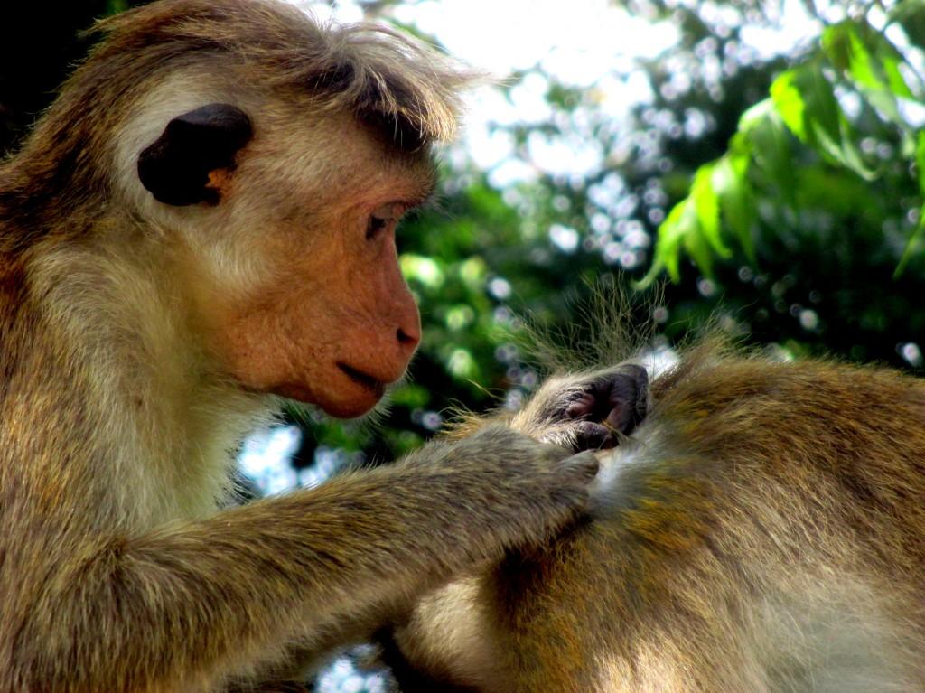 """Zdjęcia: Anuradaphura, Sri Lanka centralna, """"...i masz łupież"""", SRI LANKA"""