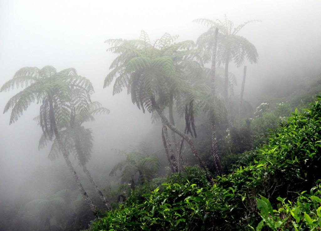 Zdjęcia: Pola herbaciane, Okolice Parku Hortona, Paprotka? Ejże!, SRI LANKA
