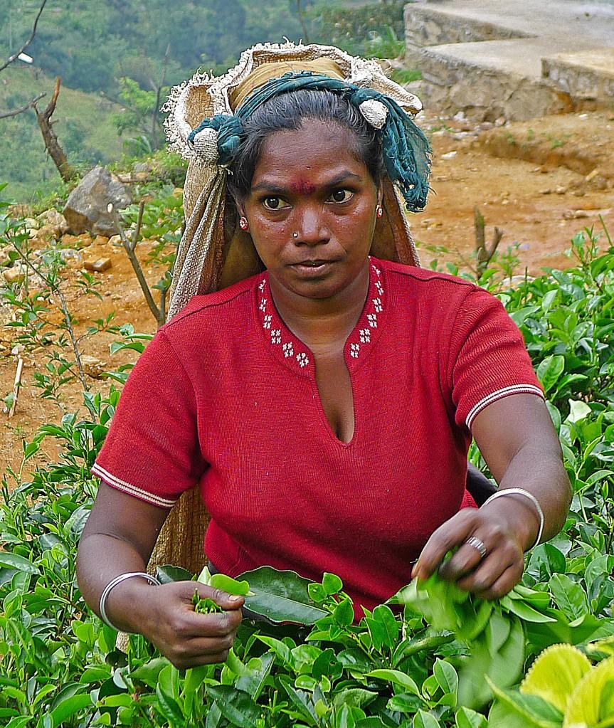 Zdjęcia: Okolice Nuwara Eliya, Prowincja Centralna, Herbaciarka, SRI LANKA