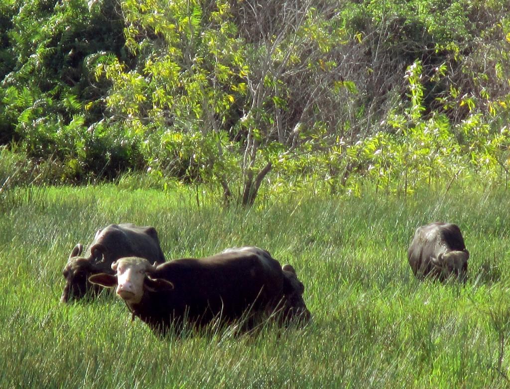 Zdjęcia: Mokradła, Chilaw, Mokro!, SRI LANKA