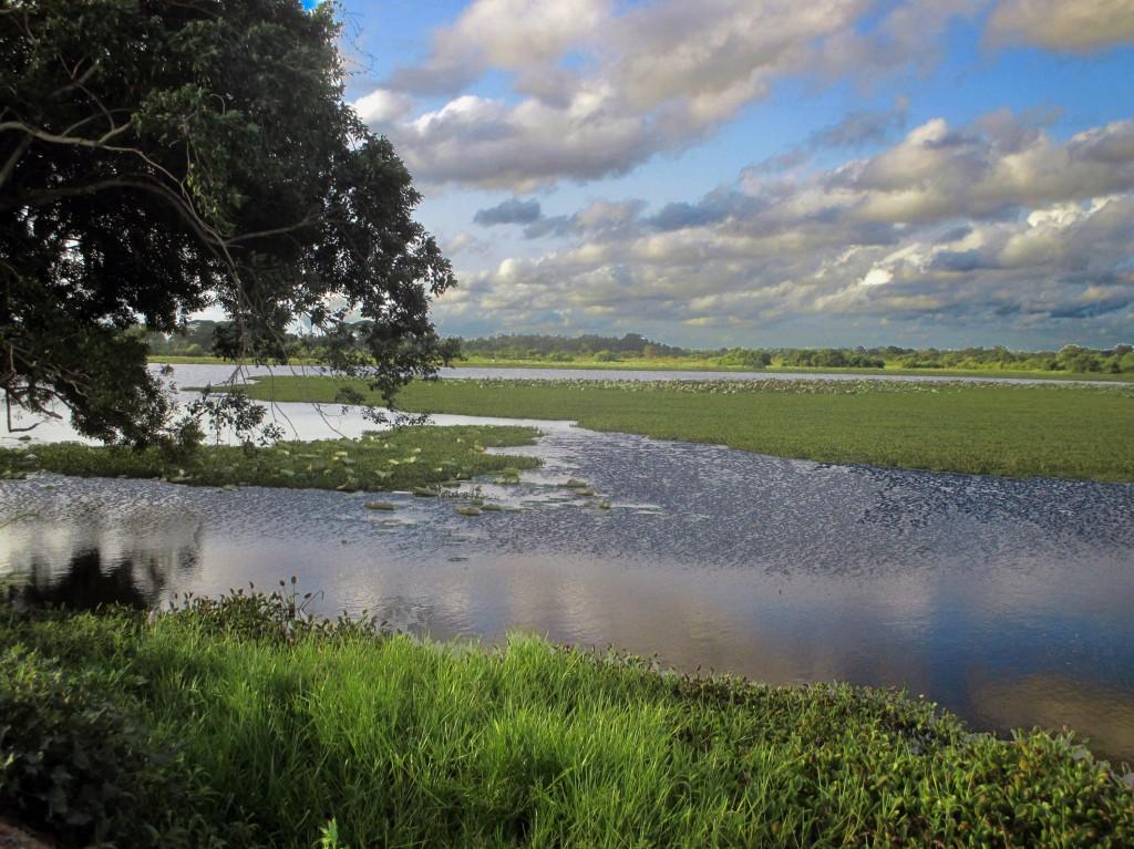 Zdjęcia: Mokradła, Chilaw, Synergia, SRI LANKA