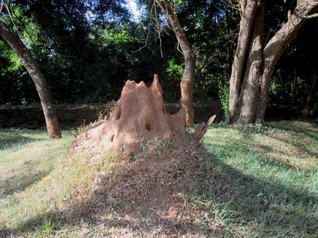 Zdjęcia: Otoczenie ruin pałacu, Sigirija, Twierdza, SRI LANKA