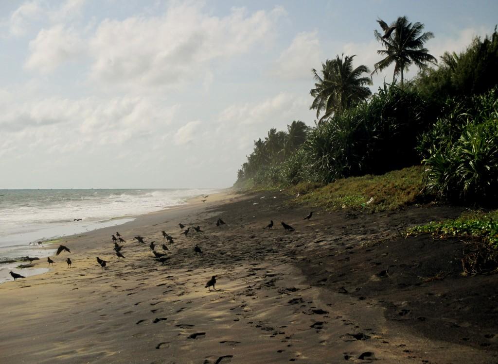 Zdjęcia: Dzikie plaże, Negombo, Czarna plaża, SRI LANKA
