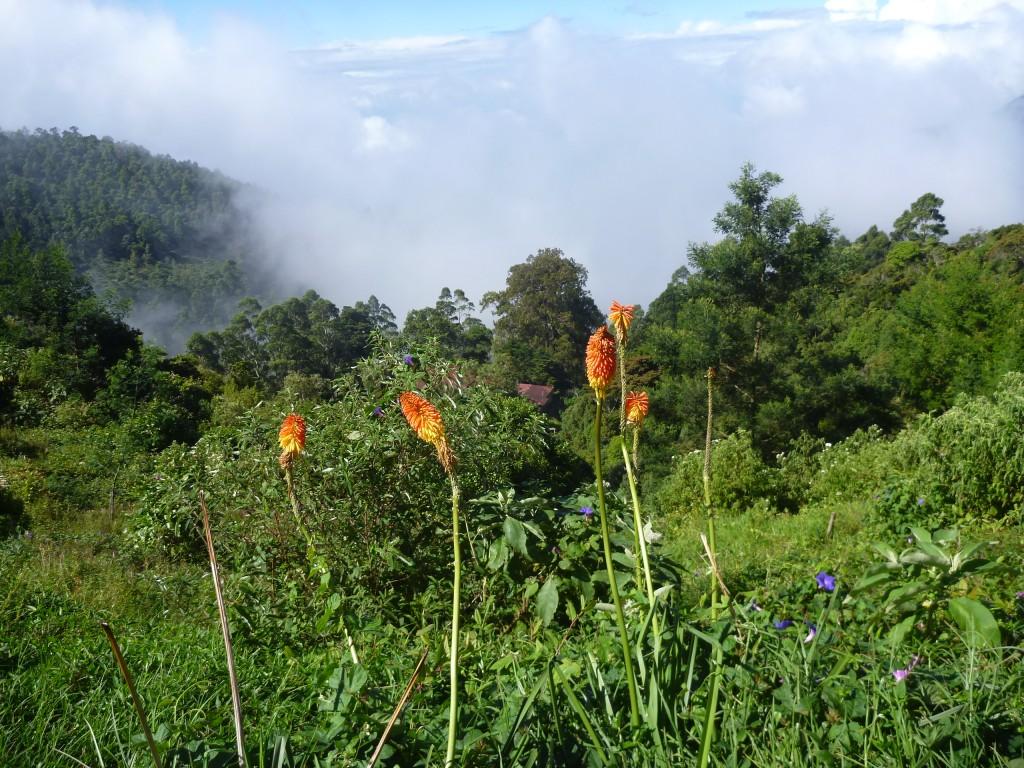 Zdjęcia: Płaskowyż, Okolice Parku Hortona, Kwiaty w chmurach, SRI LANKA