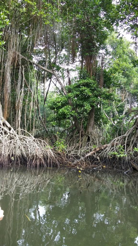 Zdjęcia: Bentota Ganga, Kaluthara, Sri Lanka, SRI LANKA