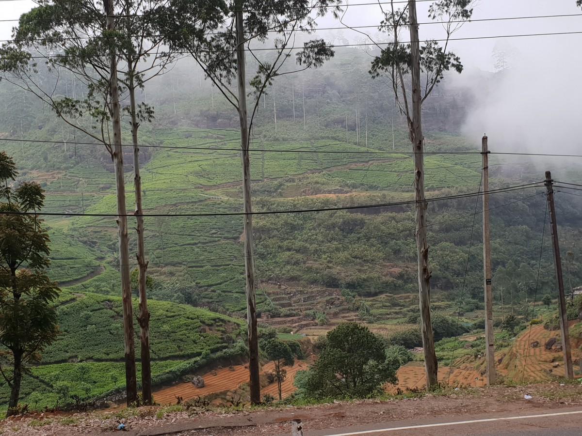 Zdjęcia: Sri Lanka, centrum wyspy, PLANTACJE HERBATY, SRI LANKA
