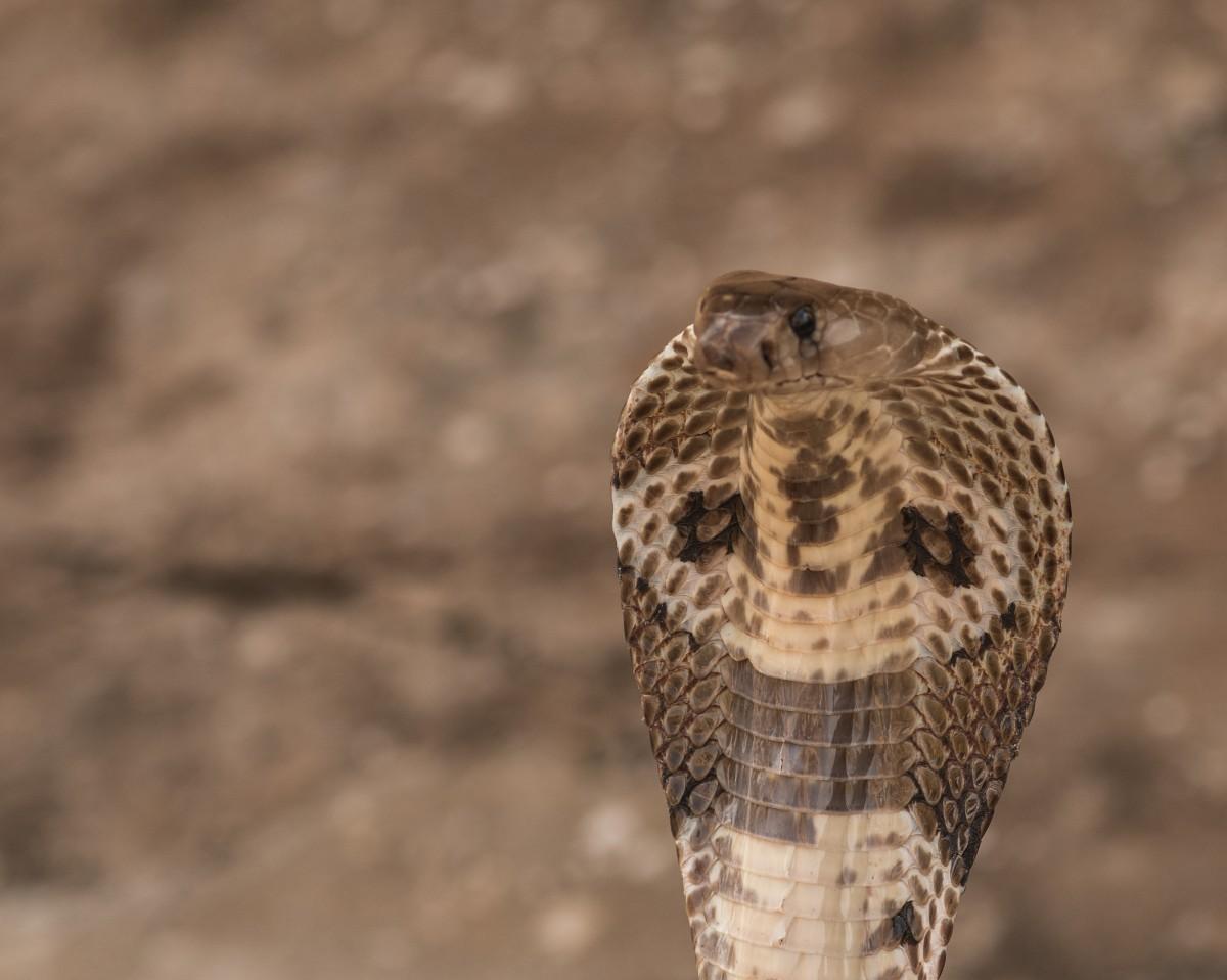 Zdjęcia: okolice Kandy, Centralny, Wąż ogrodowy ;-), SRI LANKA